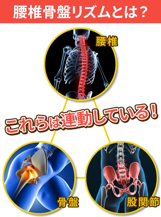 腰椎骨盤リズムとは