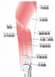 骨盤後面筋肉