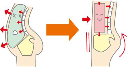 反り腰による腹圧の変化